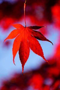 Herfst Book Tag blad | HMVVDV