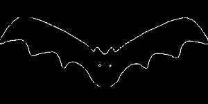 Vleermuis Horror Book Tag | Het magische verhaal